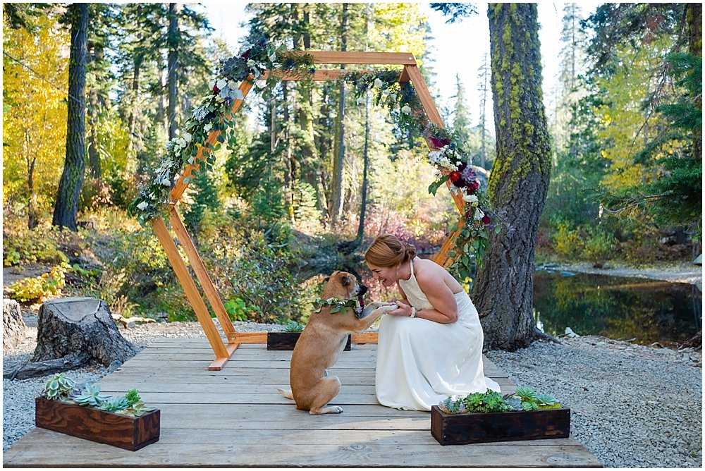 bride and her dog at gray eagle lodge wedding