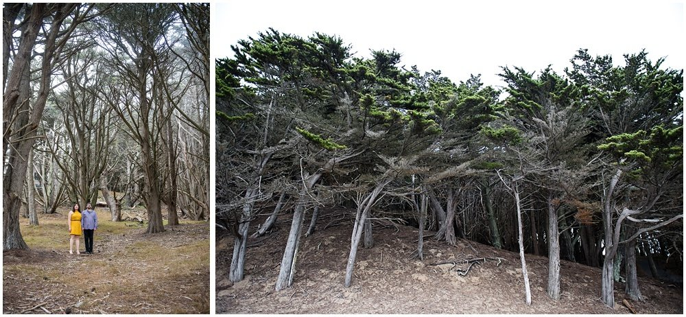 cyprus tree appreciation by couple during san francisco engagement shoots by Chloe Jackman Photography